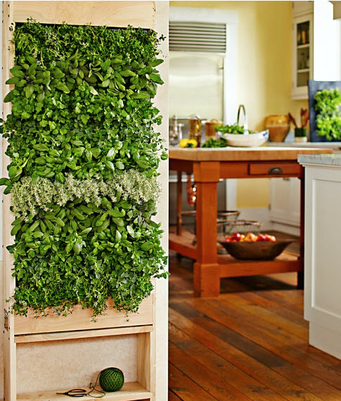 kitchen herb wall box