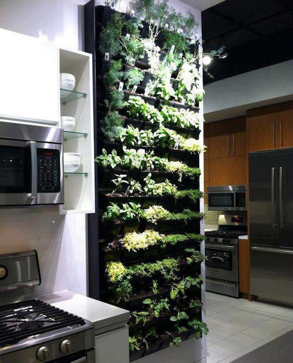 Vertical Herb Garden Kitchen Wall