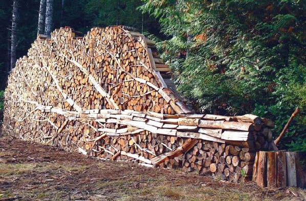Woodpile Tree Art