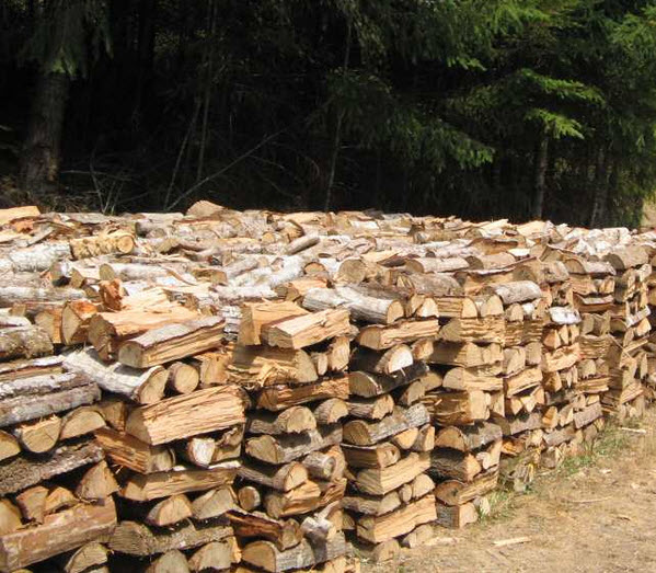 Stacked fresh Wood piles