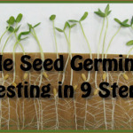 9 Step Seed Germination Test