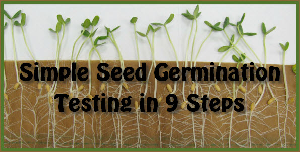 9 Step Seed Germination Test